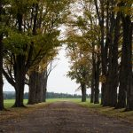tree-lines
