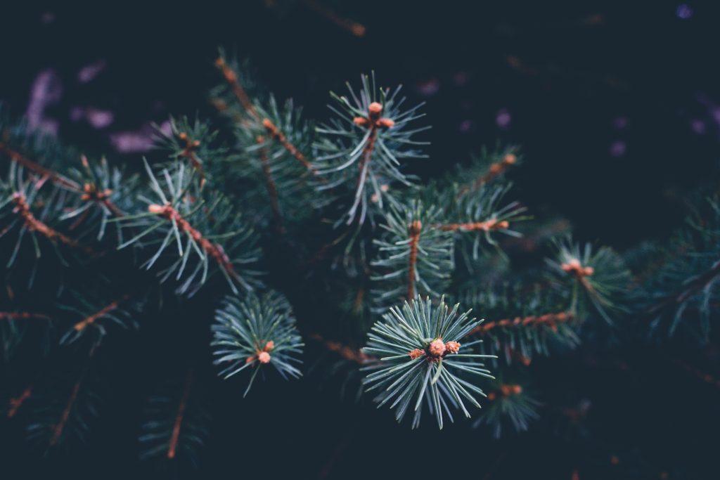 A Minimalist Christmas